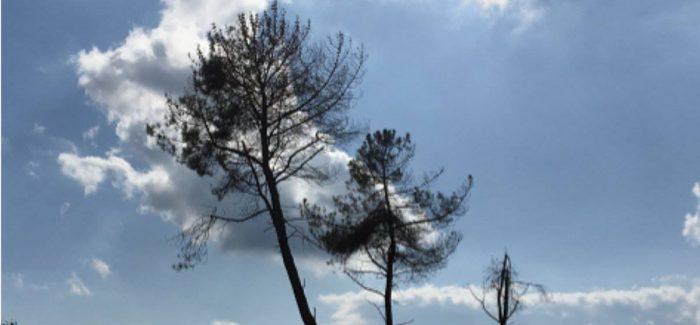 Tree of Life – Omotohi